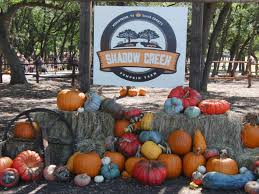 Real Pumpkin Patch Dfw by The Best Pumpkin Patches In Texas Having Fun In The Texas Sun