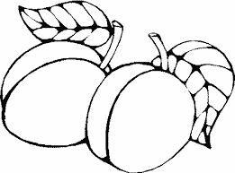 Appricots Coloring Pages Picture To Printable