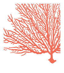 Coral Colored Decorative Items by Coral Wall Art Prints Coral Color Decor Coral Prints Water
