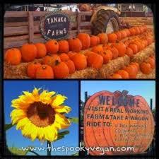 Tanaka Farms Pumpkin Patch by The Spooky Vegan 31 Days Of Halloween Tanaka Farms Pumpkin Patch