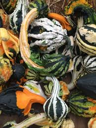 Best Pumpkin Apple Picking Long Island Ny by Fall Fun In And Around Nyc Apple And Pumpkin Picking Corn Mazes