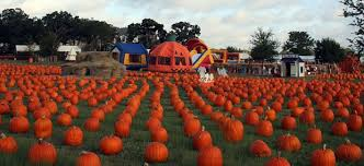 Grapevine Texas Pumpkin Patch by 5 Pumpkin Patches In Dfw To Visit This Fall Her Campus