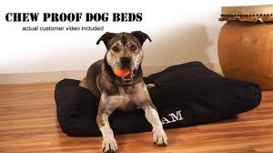 Drs Foster And Smith Dog Beds by Chew Proof Dog Beds Youtube