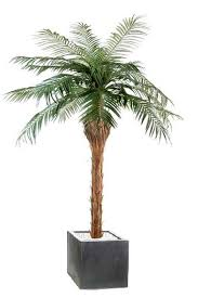 entretenir un palmier astuces déco