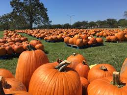 Pumpkin Patch College Station 2017 by Texas A U0026m University On Twitter