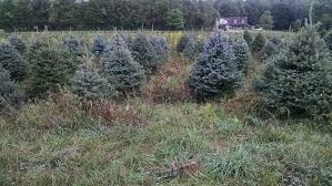 Indiana County PA Is Noted As The Christmas Tree Capital Of World Partly Because Growers Association Was Founded There