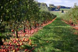 Apple And Pumpkin Picking Maryland by 4 Fun Howard County Farms To Visit With Your Family The Wayside Inn