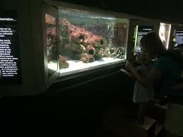 aquarium geant a visiter belgique muséum aquarium de nancy 2018 ce qu il faut savoir pour votre