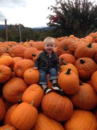 Pumpkin Patch Glendale Co by 106 Best Pumpkin Patch Fall Photo Shoot Ideas Images On Pinterest