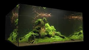 Nature's Chaos Aquascape 1 Year Old By James Findley - YouTube Awesome Aquascaping Gallery Iiac European Aquascape Channel Aquascapes Homedesignpicturewin Aquascaping Tutorial Aqurios Para Decorao Pinterest Big Tutorial Guide Continuity By James Findley The Indonesia Green Machine Ada Aquarium Acuarios Aquariums Best Of Aquascapes Fabuluxedecor Natural Iwagumi Scottish Grass Size 40x25h Lab Undergrowth Wood Tank 130l Aquadesign