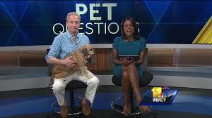 Fresh Pumpkin For Dog Diarrhea by Pet Questions Treating Your Dog U0027s Diarrhea Youtube