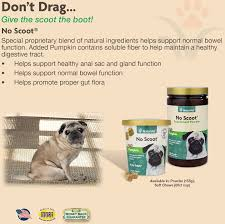 Water Soluble Pumpkin Seed Extract Uk by Naturvet No Scoot Plus Pumpkin Dog Powder Supplement 155g Bottle