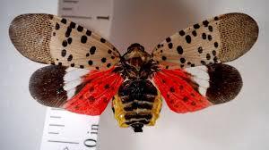 Invasive Bug Prompts Quarantine In Pennsylvania Townships The