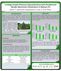 Popular Christmas Tree Species by Linking Certain Physical Characteristics With Postharvest Needle