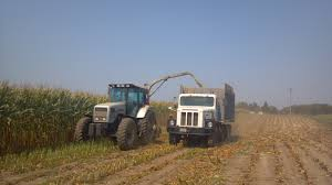 100 Silage Trucks Chopping Corn Wisconsin Dairy Farmer