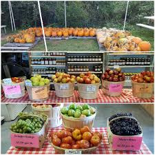 Best Pumpkin Patch Charlotte Nc by Fruit And Berry Patch Home Facebook