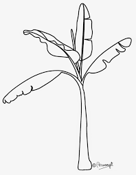 Pencil Drawing A Banana Plant Black And White Banana Tree Clipart – Cliparts And Others