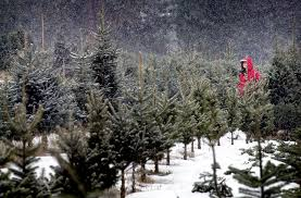 Aspirin Keep Christmas Trees Alive by Watering Your Freshly Cut Christmas Tree Right Will Pay Off Later