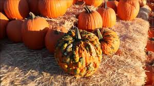 Underwood Farms Pumpkin Patch Hours by Vossler Farms Corn Maze And Pumpkin Patch Youtube