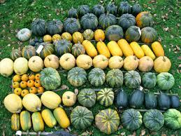 Varieties Of Pumpkins by Oilseed Pumpkins