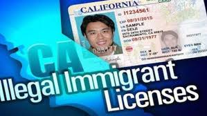 Evidence Scant California's Licensed Illegal Immigrant Drivers ... La And Long Beach Port Truckers Warehouse Workers Begin Strike Truck Meme Templates Imgflip Shield Of Honor Fareway Goose Top Gun Wants To Become A Driver Youtube Driver Resume Sample Fresh Truck Driving Alamo Movie Parody Roadmaster Drivers School Local Trucking Companies Schools Ramping Up Recruiting Methods Amid Fox16 Invtigates Records Show Bus Has Felony Record Commercial Archives Page 3 4 Advanced Watch Man Robbed By Five Men In Hillbrow News24