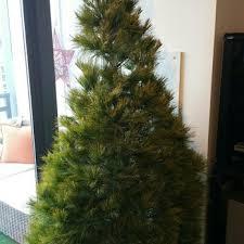 Elgin Il Christmas Tree Farm by Abbey Farms 65 Photos U0026 54 Reviews Farms 2855 Hart Rd