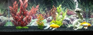 aquarium poisson prix le site du poisson quel est le prix d un poisson