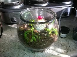 how to make a venus fly trap cactus carnivorous terrarium