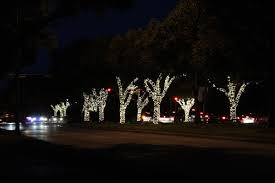 If You Have A Group Of Trees Tree Lined Driveway Or The Perimeter Your Property Is With Consider Wrapping Them To Give Dramatic