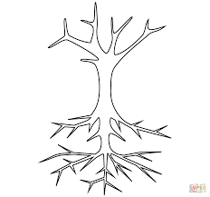 Bare Tree With Roots Coloring Page