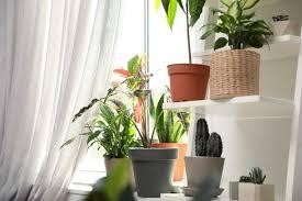 fensterbank dekorieren ideen mit pflanzen kissen und co