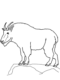 Drawing Mountain Goat Coloring Pages