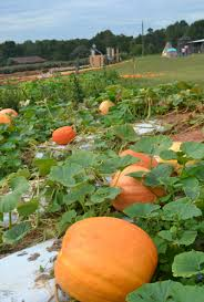 Pumpkin Patch Near Greenville Nc pumpkin patch and fall festival fun in the upstate carolinakids