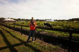 Boone Hall Pumpkin Patch And Corn Maze by October 2014 Cosmos Mariners Destination Unknown