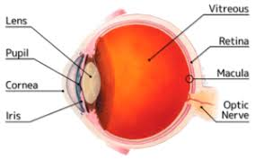 Diagram Of The Eye Showing Parts Like Lens Pupil Cornea