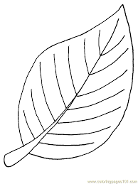 Image Result For Walnut Tree Coloring Pages
