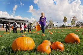 Sacramento Pumpkin Patch With Petting Zoo by Corporate Event Planner In Sacramento