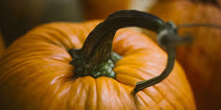 Stages Of Pumpkin Growth by How To Grow The Perfect Fall Pumpkin And Why You Need To Start Now