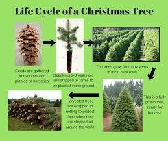 This Is Done To Shape The Tree And Make It Grow In Right Direction So A Full Beautiful Will Be Ready For Harvest