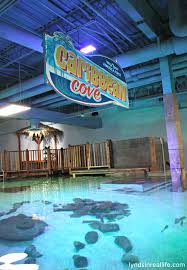 SeaQuest Interactive Aquarium, A New Kids Attraction, Comes To Las ... Kids And Sharks A Fun Morning At Seaquest Las Vegas Vintage Blue Under The Sea Interactive Aquarium Discount Tickets New Attraction Comes To Planned For River Ridge Mall In The Salt Project Things Do Planned Aquarium Folsom Faces Community Opposition Deal Now Valid All Summer Admission Tickets Or Ultimate Experience Package Certifikid Seaquests Problems Extend Beyond Discount Opening United Moms Network Quest Coupons Mk710 Deals