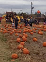 Pumpkin Patches Maryland Heights Mo by Stuckmeyer U0027s Farm Halloween Farm Fun Days Missouri Haunted Houses