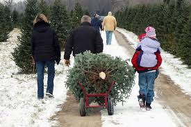 Griswold Christmas Tree Farm by Tips On Picking A Real Live Christmas Tree Digital Trends