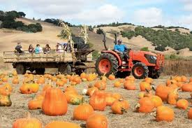 Uesugi Farms Pumpkin Patch by Top 20 Pumpkin Patch Places In The Bay Area Places For Kids