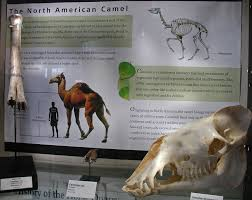 Hagerman Fossil Beds National Monument by Fossil Beds National Monument Hagerman Idaho Travel Photos By