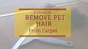 Dog Hair Carpet Removal by 5 Unusual Ways To Remove Pet Hair From Carpet Smart Vacuums