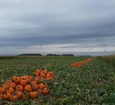 Ms Heathers Pumpkin Patch Address by Helgoths Pumpkin Patch Home Facebook