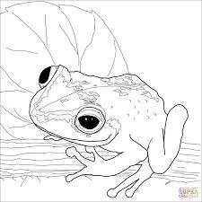 Dibujo De Rana Coquí Para Colorear Dibujos Para Colorear
