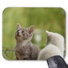 tapis de souris chat curieux personnalisés zazzle ca