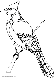 Ideal Printable Bird Coloring Pages