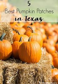 Pumpkin Patch Waco Tx 2015 594 best i heart austin images on pinterest texas austin tx and